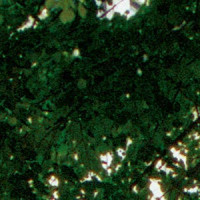Brancoveneasca